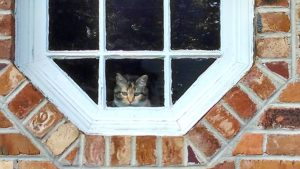 in-the-window